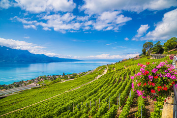 Lake shore Wine tour in Switzerland